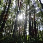 El bosque que rodea el pueblo