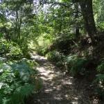 Camino de subida a Casas de la Sierra